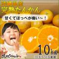 沖縄山原産たんかん10kg