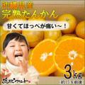 沖縄山原産たんかん3kg